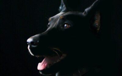 Få noget lys på din hund.. IDIOT!